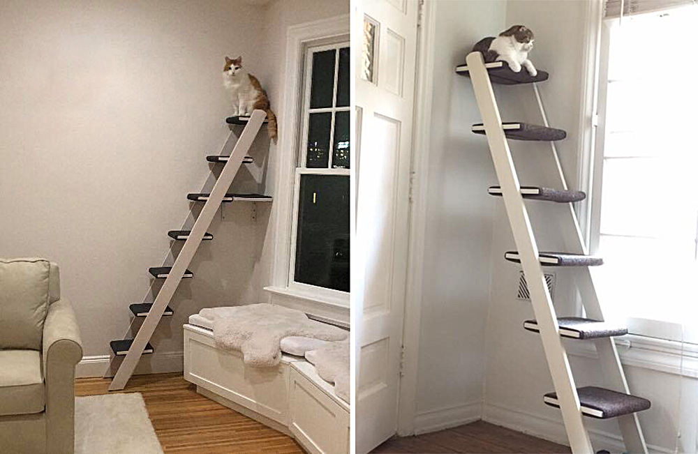 Cat Ladder: Great Alternative to a Traditional Cat Tree