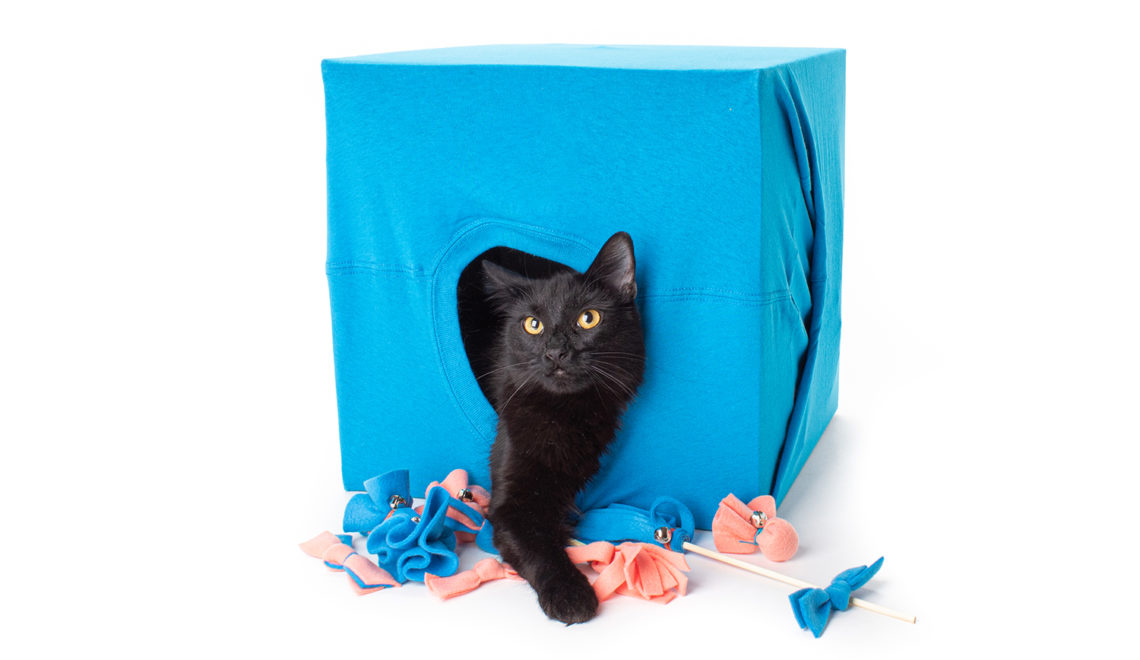 DIY Foster Cat Kit: 5 Easy Catification Projects Every Foster Cat Needs!